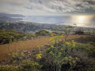 @carbieq took an evening walk on Milagra Ridge last week and captured these beautiful, peaceful vibes. Wishing everyone a healthy and safe October. 💕 #bayarearidgetrail #pacifica #trails #nature #outdoors #sunset