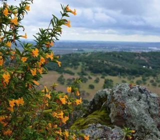 Have you visited Patwino Worrtla Kodoi Dihi Open Space yet? It's a future Ridge Trail location, and this Saturday 2/13 you can get a sneak-peek on a guided hike with @solanolandtrust! It will be 4-6 miles starting at 9am. Register at the link in our bio! Photo via Solano Land Trust