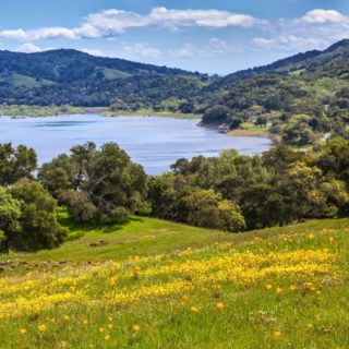 Tomorrow, our partners all around the Bay Area are offering different ways to celebrate Earth Day, from guided wildflower hikes, volunteer opportunities, or learning more about the organizations working hard to promote stewardship of natural spaces. See a list of events at the link in our bio.   🌎 Comment with your plans to celebrate Earth Day! 🌎  #earthday #bayarearidgetrail #trails #outdoors #nature #hiking #biking #equestrian #bayarea