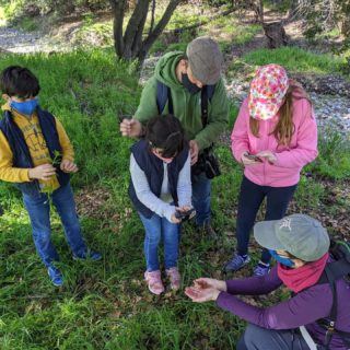 We had a blast last month at the BioBlitz event we hosted with @bioblitz.club and @coyotecreeksj ! 32 people came out and collected 287 observations of plants, animals and insects in Penitencia Creek County Park in San José. 🌼🐞🐛  To learn how you can explore nature on the Ridge Trail visit the link in our bio!