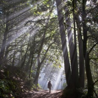 Want to get out on the trail more in 2021? Set yourself up for success with monthly inspiration from the Ridge Trail, right to your inbox. 📩Sign up for our e-news at the link in our bio! Photo: Purisma Creek Redwoods #bayarearidgetrail #trails #hike #bike #equestrian #outdoors #nature #bayarea #adventure #2021 #explore